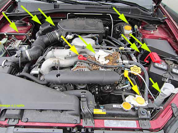 a rodent chewed up this Subaru engine compartment