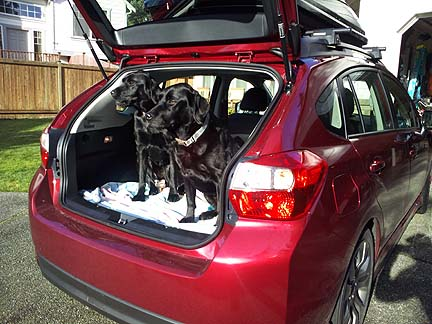 2 black labs in a 2012 Impreza 5 door