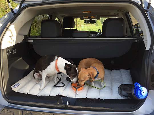 Subaru Crosstrek Dog Pictures To Pin On Pinterest Pinsdaddy
