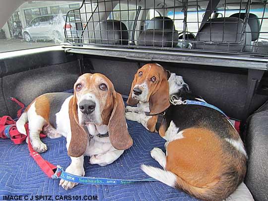 Subaru And Dog Photographs Subaru Owners Love Their Dogs ...